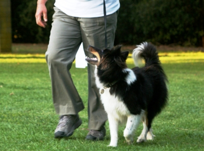 Obedience Training: Level 1